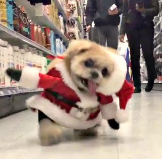 puppy santa clause terrorizes NYC supermarket