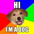 I'm a dog photo rainbow colors