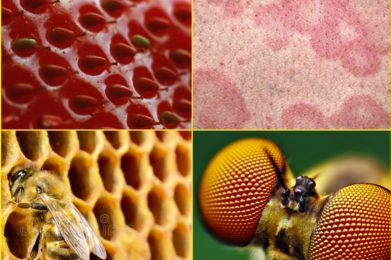 Should I seek counseling for my fear of holes (Trypophobia)?